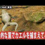 【Green Hell】原始的な罠でカエルを捕まえてみた【アフロマスク】[ゲーム実況byアフロマスク]