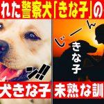 【感動】警察犬試験に6年連続で落ちながらも皆に愛された「きな子」の物語とは!?【漫画】【マンガ動画】[ゲーム実況byラファエルゲーム]