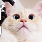 【月曜から夜ふかし】ちょっとだけモンハンをやって平日に備える生放送【あいろん】[ゲーム実況by癒しのあいろん雑学ゲーム実況]