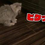 【子猫】ルンバに喧嘩を売った子猫の末路が悲惨すぎるwwww(#02)【ラガマフィン】[ゲーム実況byBelle]