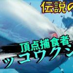 【サメ版GTA】狩猟から生き延び続けた伝説のマッコウクジラ 悪質タックルで襲い掛かる #14【ゲーム実況】マンイーター MAN EATER【 スプラッターゲーム 】[ゲーム実況by島津の鉄砲兵]