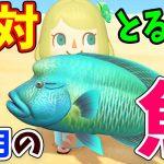 【あつ森】7月から釣れる魚を全て紹介!レアな魚の魚影や買取値段をコンプしながら解説!ナポレオンフィッシュやマンボウ、カジキの釣り方がこれで分かる!【あつまれどうぶつの森 7月の魚図鑑コンプ】[ゲーム実況byころな Corona Games]
